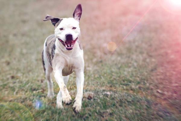 Sveti's Tierbetreuung & Hundeschule